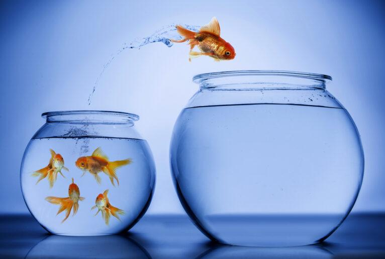 Fisch - Immobilienwechsel