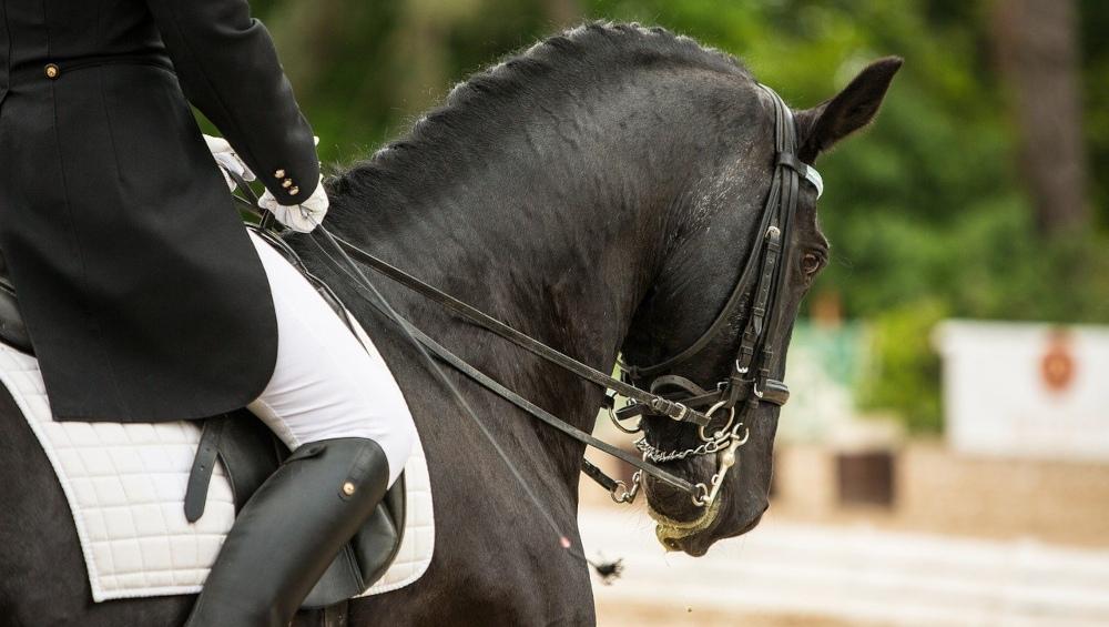 Brander Dressurfestival 2019: Reiterin auf ihrem Pferd
