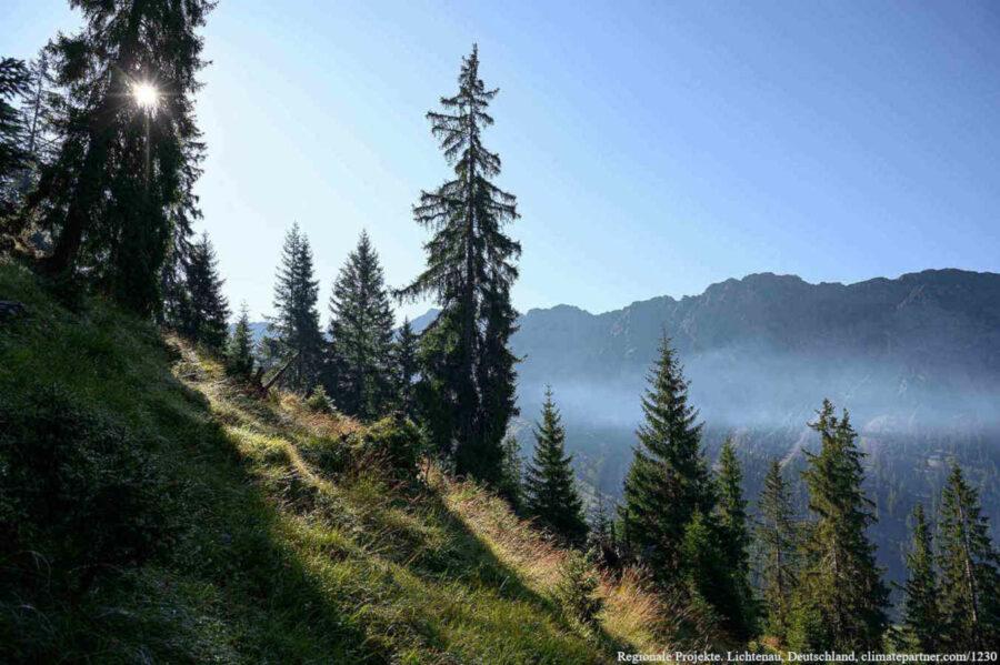 Nachhaltigkeitsprojekt Oberallgäu Wald